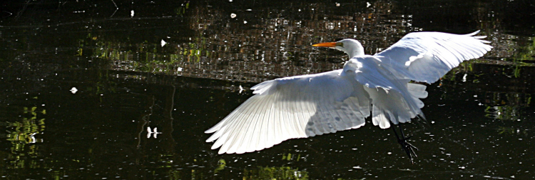 egret-feature